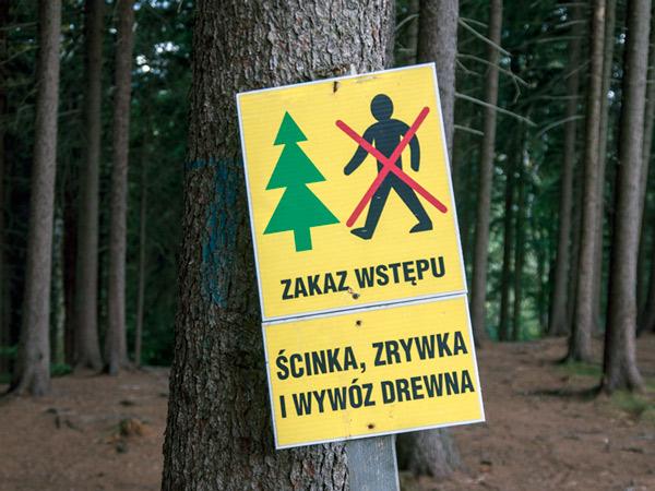 Kradną drzewa?